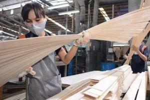 Thương nhân khai báo tự nguyện thông tin về năng lực sản xuất gỗ dán xuất khẩu sang Mỹ