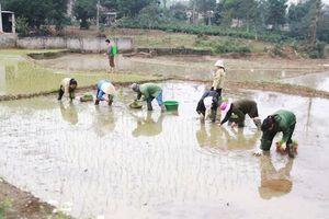 Hà Nội còn 5/23 quận, huyện chưa lấy nước gieo cấy vụ Xuân 2020