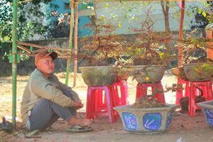 Người cười, người khóc giữa chợ hoa xuân ngày 30 Tết