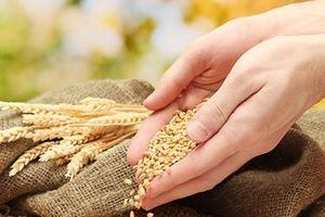 Một số vấn đề đặt ra trong triển khai chính sách đảm bảo an ninh lương thực quốc gia