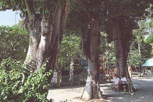 Sài Gòn còn bao nhiêu cây gòn?