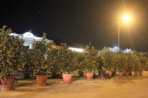 Quảng Nam: Người bán hoa khóc ròng vì ế hoa đêm 30 Tết