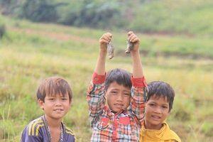 Ngày xuân lên Tây Nguyên thưởng thức món 'chuột quý tộc' trên đỉnh núi Ngọc Linh