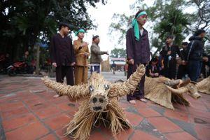 Độc đáo lễ hội trâu rơm, bò rạ tại Vĩnh Phúc