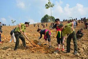 Trồng rừng để bảo vệ môi trường sinh thái và phát triển kinh tế