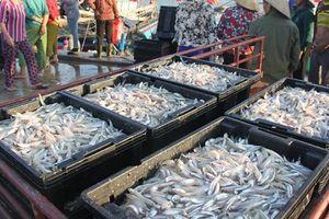 Ngư dân Hà Tĩnh trúng đậm 'lộc biển' đầu năm, bỏ túi hàng chục tỷ đồng