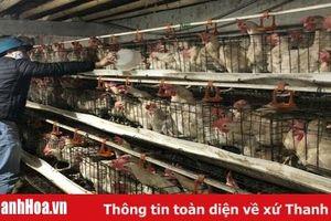 Xã Hoằng Thịnh phát triển kinh tế trang trại