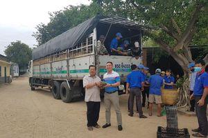 PVOIL 'giải cứu' dưa hấu tại Ninh Thuận
