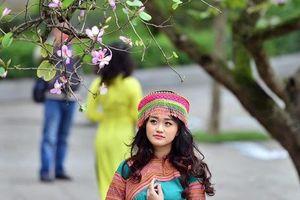 Ngây ngất hoa vùng Tây Bắc bung nở, phủ khắp phố phường Hà Nội