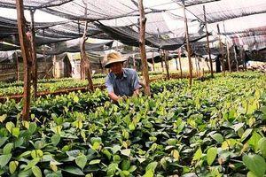 Vi phạm về sản xuất, buôn bán giống cây trồng phạt đến 100 triệu đồng