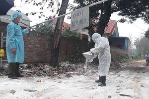 Cúm gia cầm xuất hiện tại 5 địa phương, tiêu hủy hơn 40.000 con