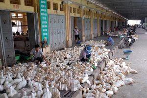 Kiểm soát chặt giao dịch gia cầm trước nguy cơ dịch bệnh cúm A