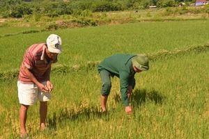 Gần 80.000 hộ dân thiếu nước do hạn hán, xâm nhập mặn ăn sâu vào đất liền
