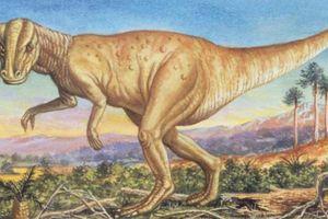 Phát hiện dấu tích bệnh ung thư hiếm gặp trong hóa thạch khủng long 66 triệu năm