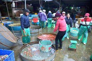 Phát hiện 18 hộ kinh doanh không đăng ký tại chợ cá lớn nhất Thủ đô