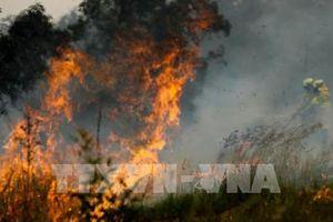 Bình Thuận bác tin rừng dầu cháy ngùn ngụt
