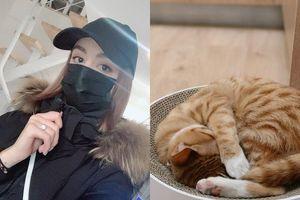 Không muốn bỏ lại mèo cưng, cô gái quyết tâm ở lại tâm dịch Covid-19