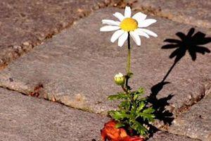 Cuộc sống đầy thị phi, hãy cứ bình thản mà đón nhận