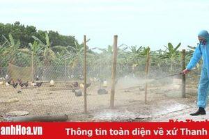 Huyện Thạch Thành triển khai quyết liệt các biện pháp bảo vệ đàn vật nuôi