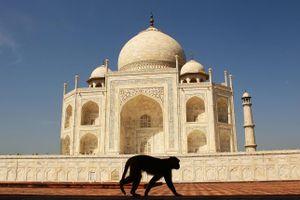 Ấn Độ: Trang bị ná cao su bảo vệ ông Trump thăm đền Taj Mahal