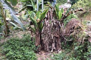 Ngăn ngừa, kiểm soát sinh vật ngoại lai xâm hại ở Hà Giang