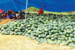 Gỡ nút thắt cho nông sản Việt