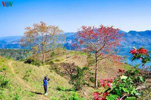 Đẹp mê mẩn mùa hoa gạo Quỳnh Nhai, Sơn La