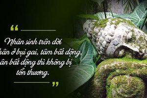 Phật dạy: Con người nếu không hiểu rõ 'chữ này' đồng nghĩa tự đẩy mình xuống vực sâu đau khổ