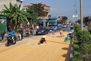 Người dân và CSGT cùng nhau giúp tài xế thu gom 10 tấn ngô rơi kín mặt cầu