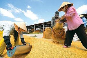 Cơ hội phục hồi cho xuất khẩu gạo