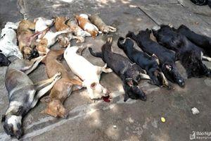 Hàng loạt chó, mèo của một xã ở Nghệ An chết bất thường, nghi 'trúng bả'