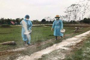 Không để dịch cúm gia cầm bùng phát ra diện rộng