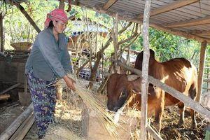 Mường Lát, Thanh Hóa: Giúp người dân vùng đặc biệt khó khăn gỡ nghèo