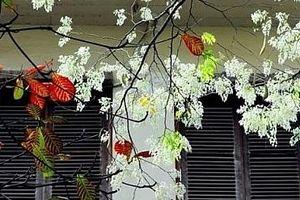 Khúc giao mùa tháng Ba