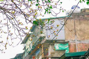 Tháng Ba Hà Nội nên thơ trong mùa cây trổ lá