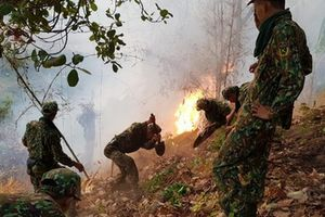 Cháy rừng Núi Cấm suốt 2 ngày, gần 600 người tham gia dập lửa