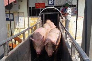 Tính tới phương án nhập khẩu lợn từ Campuchia