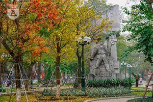 Mùa cây thay lá, Hà Nội đẹp đến nao lòng