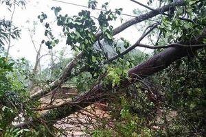 Một người tử vong, hàng ngàn ngôi nhà ở miền núi phía Bắc bị tàn phá vì mưa lớn