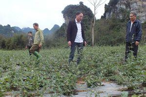Tuyên Quang: Nông dân Lâm Bình thoát nghèo từ trồng cây dược liệu