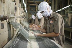 Các ngành báo cáo gì tại cuộc họp về xuất khẩu gạo