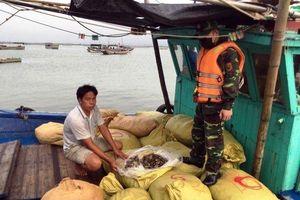 Bắt giữ gần chín tấn thủy sản vận chuyển trái phép