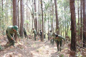 Nguy cơ cháy hàng chục nghìn ha rừng tại Gia Lai do nắng nóng kéo dài