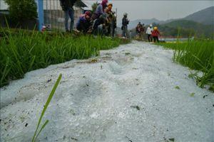 Dông lốc, mưa đá tại Điện Biên làm 303 ngôi nhà tốc mái, 196 ha cây trồng hư hại