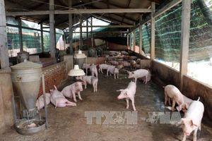 Đồng Nai công bố hết dịch tả lợn châu Phi