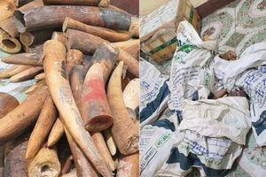 Bắt xe tải chở hơn 2 tạ ngà voi từ Nghệ An ra Hà Nội tiêu thụ