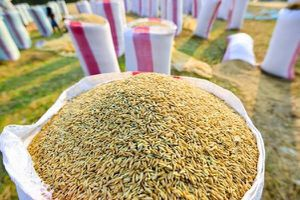 Năm nay Việt Nam có thể xuất khẩu 6 triệu tấn gạo
