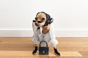 Chú chó nổi tiếng trên mạng vì mặc sành điệu như fashionista