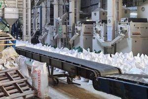 Kiến nghị xuất khẩu gạo lại với hạn mức 400.000 tấn/tháng