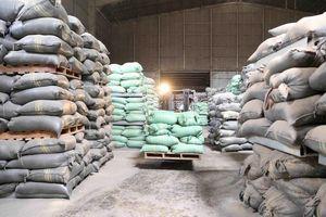 Khẩn trương mua đủ gạo nhập kho dự trữ quốc gia